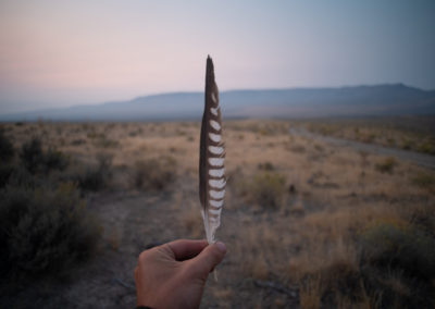 Peregrine falcon feather at Thacker Pass