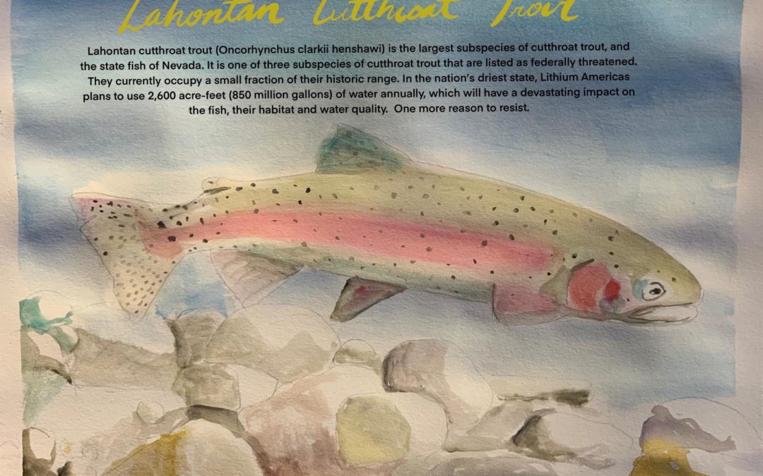 Species of the Week: Lahontan Cutthroat Trout