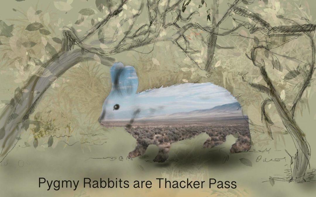 Species of the Week: Pygmy Rabbit