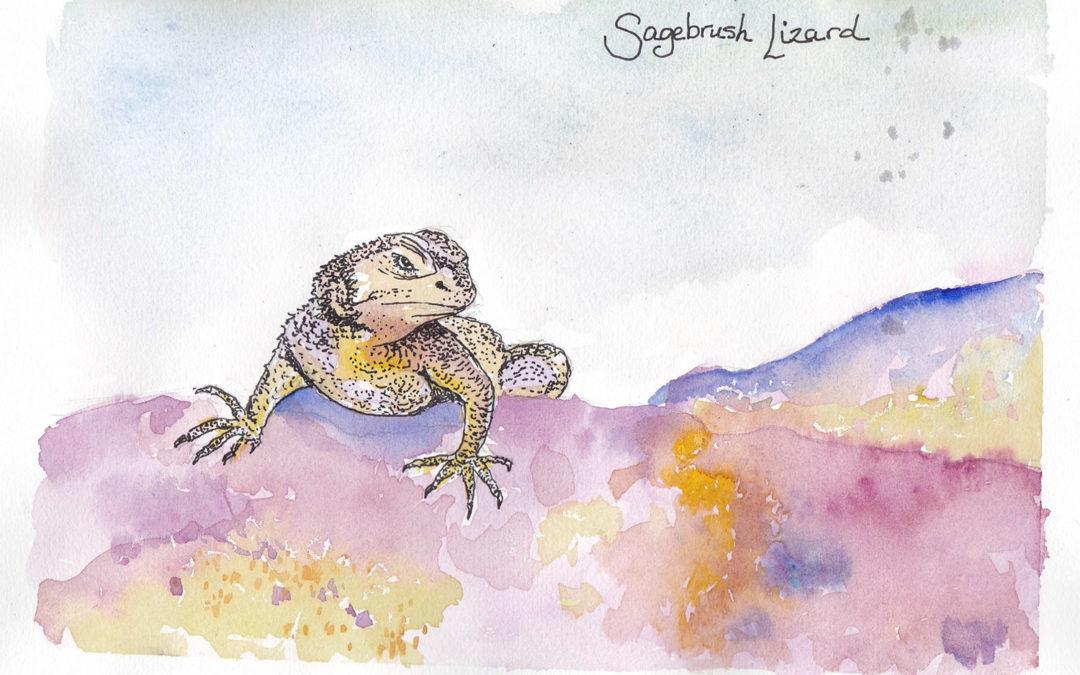 Species of the Week: Sagebrush Lizard