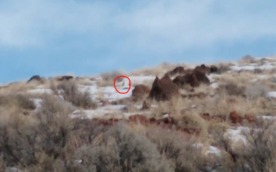 Video: Sage-grouse at Thacker Pass Camp