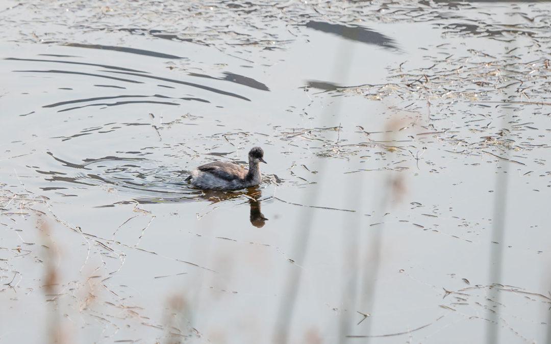 Bird at Thacker Pond