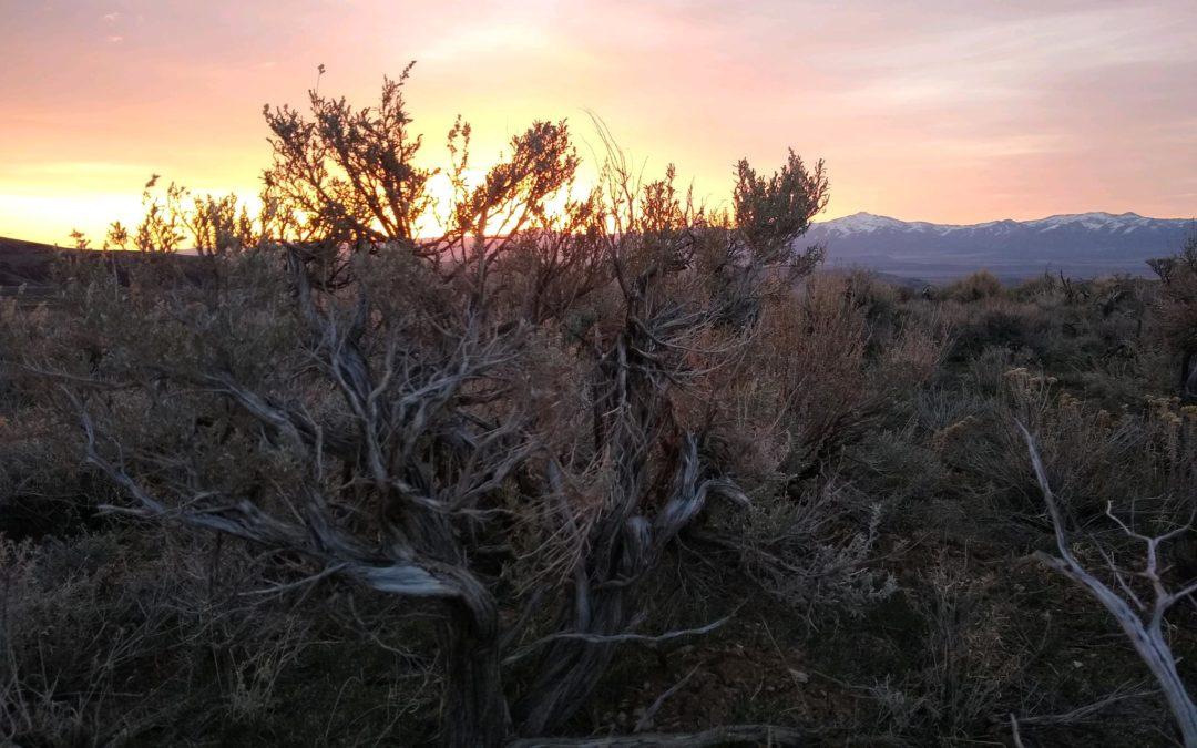 Sunset on old growth Sagebrush at Thacker Pass