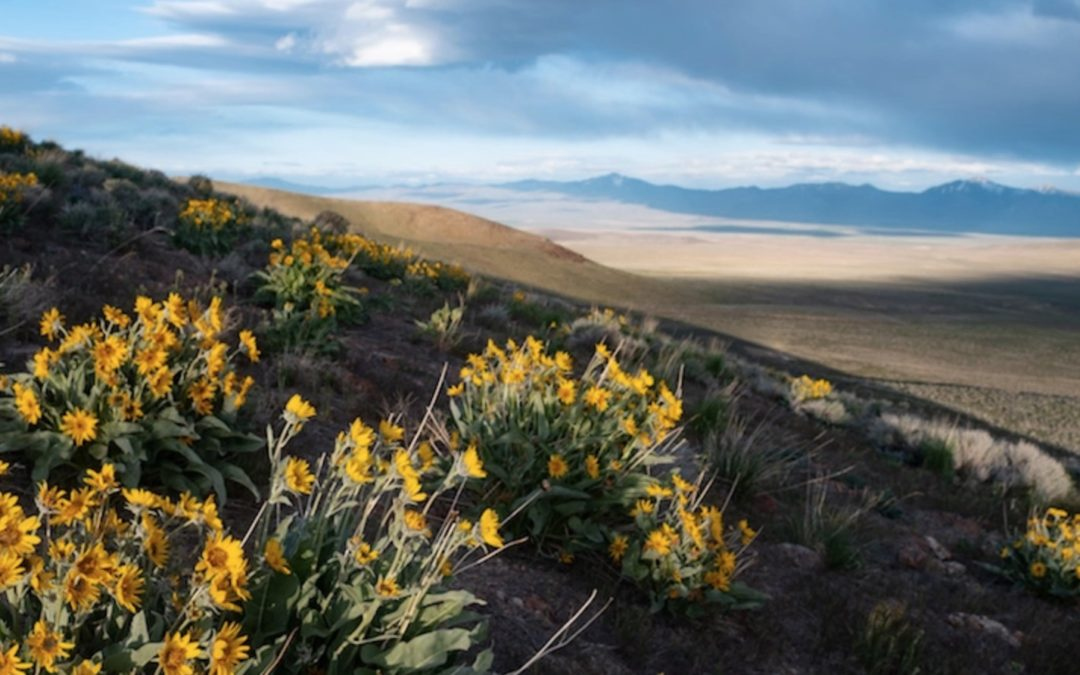Will Nevada support renewable energy vs biodiversity & Indigenous rights?